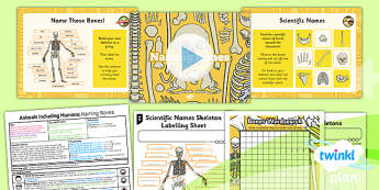 PlanIt - Science Year 3 - Animals Including Humans Lesson 4: Naming Bones Lesson Pack