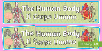 The Human Body Display Banner - The Human Body Display Banner - ourselves, body, science, header, sceince, oursleves, ourselvs, abnn