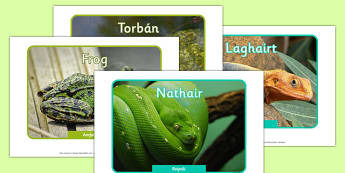 Irish Reptiles and Amphibians Display Photos Gaeilge - roi, irish, gaeilge, vocabulary, display photos, reptiles, amphibians