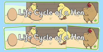 Life Cycle of a Hen Display Banner - Hen, life cycle, lifecycle, display, banner, poster, plant growth, Hen, egg, chick, hatch, Life cycle, Foundation stage, knowledge and understanding of the world, investigation, living things