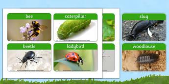 Minibeast Photo Word Cards - minibeast, visual aid, animals