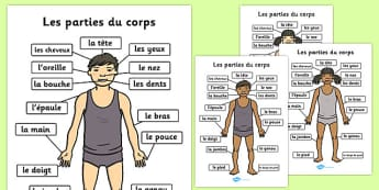 Parties Du Corps A4 French - french, parts, body, body parts, ,a4