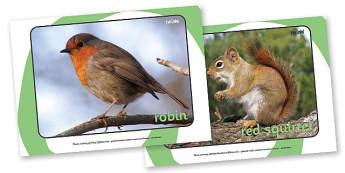 British Wildlife Display Photos - Display Posters, Wildlife,  A4, display, rabbit, fox, badger, squirrel, bird, robin, weasel