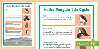 Yellow-Eyed Penguin/Hoiho Life Cycle Display Poster
