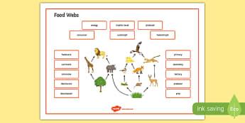 Food Webs Word Mat