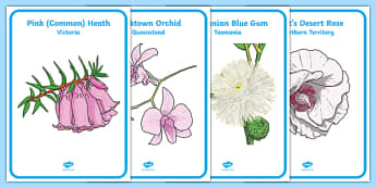 Australian States and Territories Floral Emblems Display Posters - australia, floral emblem, flowers, Australian natives, states, territories, New South Wales, Victoria Queensland, South Australia, Tasmania, Western Australia, Northern Territory, Aus