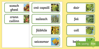 Irish Trees (crann) Gaeilge Word Cards - ROI- National Tree Week 5th - 12th March, trees, ireland, ash, oak, beech, sycamore, horse chestnut,