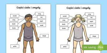Karty Części ciała i zmysły - zmysły, części, ciała, człowiek, budowa, zmysł, zmysłów, słuch, węch, dotyk, wzrok, smak,