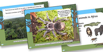 Jungle Facts PowerPoint - powerpoint, facts powerpoint, jungle powerpoint, facts, jungle, animals, plants, trees, information powerpoint, information