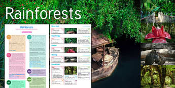 Rainforest: Imagine, rainforests imagine