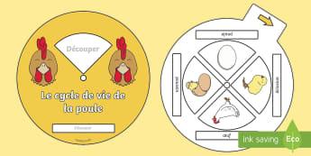 Roue  : Le cycle de vie de la poule  - poule, cycle de vie, sciences, cycle 1, cycle 2, cycle 3, hen, chicken, life cycle, Pâques, Easter,