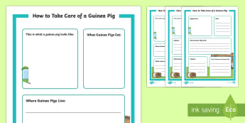 How to Take Care of a Guinea Pig Fact File - Pets, pet, EYFS, KS1, take, care, look, after, family, member, members, vet, vet surgery, surgery, i