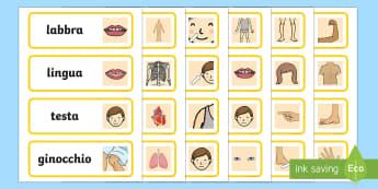 Le Parti del Corpo Parole Illustrate - le, parti, del corpo, illustrazioni, vocaboli, parole, illustrate, scienze, italiano, italian, mater