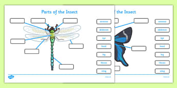 Parts of the Insect Activity - parts of the insect, insects, insect parts, insect activities, types of insect, parts of insect, activites about insects