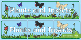 Plants and Insects Display Banner - Minibeast Display Banner - Banner, Minibeasts, Display, Topic, Foundation stage, knowledge and under