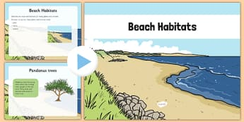 Beach Habitat PowerPoint - australia, Science, Year 1, Habitats, Australian Curriculum, Beach, Living, Living Adventure, Environment, Living Things, Animals, Plants, PowerPoint