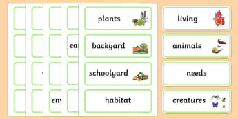 Schoolyard Safari Word Wall Display Cards - Australian Curriculum, Schoolyard Safari, science, Year 1, word wall, display