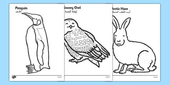Arctic Animals Colouring Images Arabic Translation - arctic, animals, colouring, images, arabic