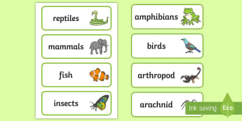 Types of Animals Word Cards - vocab cards types of animals - word cards, Primary Resources English, Literacy, Letters and Sounds,