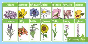 Flower Identification Display Posters - Flower Identification Display Posters - woodland, flower, identification, poster, activity, display,