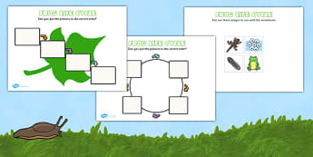 Frog Life Cycle Cut And Paste - Frogspawn, Tadpole, Froglet, Frog, Minibeasts, Topic, Foundation stage, knowledge and understanding of the world, investigation, living things, snail, bee, ladybird, butterfly, spider, caterpillar