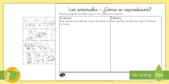 Ficha de actividad:  Los animales ¿cómo se reproducen?   - animales, grupos, clasificación, vivíparos, ovíparos, reproducen, reproducción,Spanish