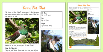 New Zealand Native Birds Keruru Fact Sheet - nz, new zealand, Native, birds, animals