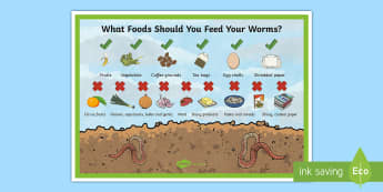 What to Feed Worms in a Worm Farm Display Poster - Australia YR 3 and 4 Design Technology, recycling, reuse, worm farm, sustainability, sustainable liv