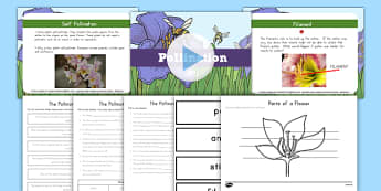 Plant Pollination Activity Pack - Spring, First Day of Spring, next generation science, science, life cycle, plants, pollination, work