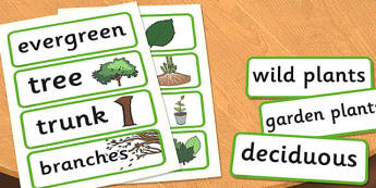 Year 1 Plants Scientific Vocabulary Cards - science, card, words