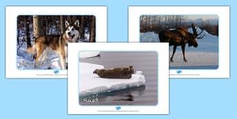 صور عرض حيوانت القطب الشمالي - وسائل تعليمية، موارد تعليمية