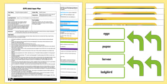 EYFS Ladybird Life Cycle Adult Input Plan and Resource Pack - EYFS, Eric Carle, The Bad Tempered Ladybird, minibeasts, animals, understanding the world, life cycl