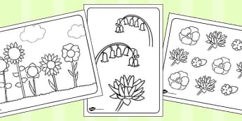 Flowers Colouring Sheets - colouring sheets, flowers colouring sheets, coluring in flowers, colouring worksheets, colour in flowers