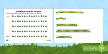 Ordering Caterpillar Lengths Activity Pack - activity pack, order