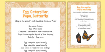 Egg, Caterpillar, Pupa, Butterfly Song - butterfly life cycle, butterfly, life cycle