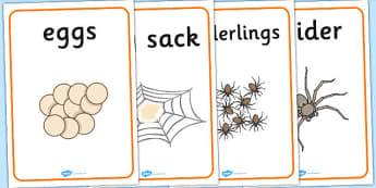 Spider Life Cycle Growth Display Posters -spider posters, spider life cycle posters, spider growth posters, posters, display posters, life cycle posters