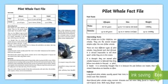 Pilot Whale Fact File - pilot whales, NZ marine life, sea life, sea mammals, dolphins, conservation, beached whale, environm