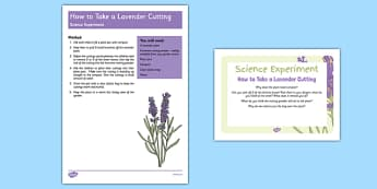 EYFS How To Take A Lavender Cutting Science Experiment and Prompt Card Pack - plants, growth, gardening, new life