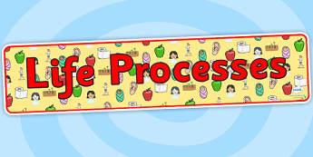 Life Processes Display Banner - life processes, living things, life processes banner, changes, life processes display, life processes display header, ks2