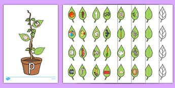 Beanstalk Phonics Resource Pack - EYFS, KS1, phonics, Letters and Sounds, initial sounds, alphabet, letter sounds