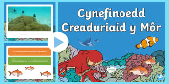 Pŵerbwynt Fideo Cynefinoedd O Dan y Môr - Ar Lan y Môr,Seaside, Under the Sea, under the sea, sea, Sea, seaside, Under the sea, beach, Beach,