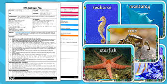 Sea Creature Shapes EYFS Adult Input Plan and Resource Pack - seaside, shape
