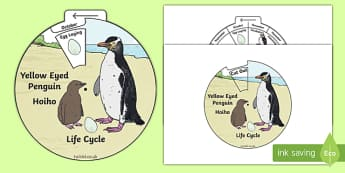 Yellow Eyed Penguin/Hoiho Life Cycle Wheel Split Pin Activity
