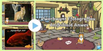 Pŵerbwynt Ffotograffau Anifeiliaid Anwes -  Mis Cenedlaethol Anifeiliaid Anwes, National Pet Month , anifeiliaid anwes, Anifeiliaid Anwes, cath