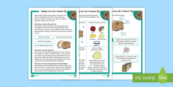 KS1 How To Look After a Guinea Pig Differentiated Fact File - Pets, pet, EYFS, KS1, take, care, look, after, family, member, members, vet, vet surgery, surgery, i