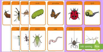 Ngārara Flashcards Te Reo Māori - Insects, ngārara, mumutawa, ladybird, ngata, snail, pungawerewere, spider, rō, stick insect, anuhe