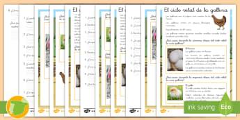 Comprensión lector de atención a la diversidad: El ciclo vital de la gallina - gallo, aves, ave, animales, granja, animal, leer, lectura, escritura, comprensión, lee, escribir, t