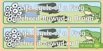 Life Cycle of a Frog Banner English/Welsh - Bilingual Welsh and English Displays, Incidental Welsh, displays, minibeast, minibeasts, cylchred by