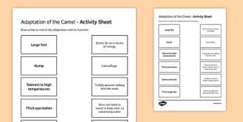 Camel Adaptations Match and Draw
