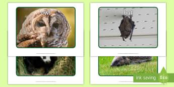 Woodland Nocturnal Animals Display Photos - EYFS Owlets, Owl Babies, Martin Waddell,  owl, nature, british, wildlife, nocturnal, night, animals,